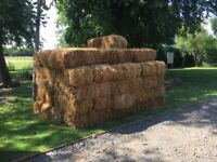 Straw Hay bales for sale