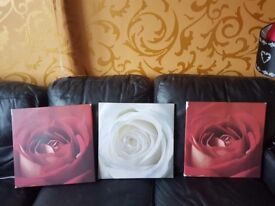 3x rose canvases