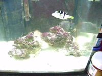 marine fish tank 60ltr with live rock for sale also have 2 clown fish and puffer fish 4 sale