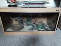 Complete setup corn snake plus 3ft solid beach vivarium
