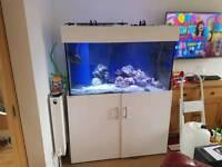 Marine Fish Tank, cabinet and sump