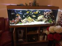 5ft full Malawi setup £300(just add water)