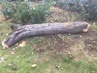 Tree trunk for winter logs wood burner etc.