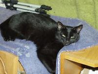 Black female cat - very beautiful