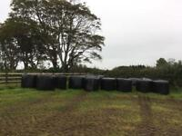 Silage bales 18 large round £10 each