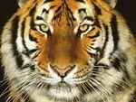 Tiger Electronics 1