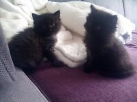 2 cute kittens for sale
