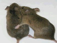 BED BUG,MICE ,COCKROACHES CONTROL.......LOWEST PRICE