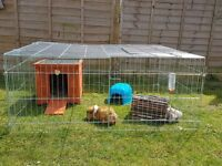 Summer holiday pet sitter/walker/feeder avaliable in Yeovil