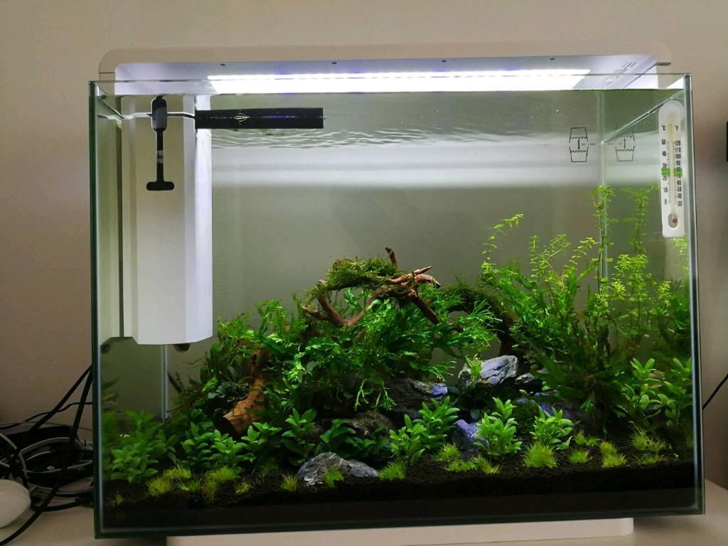Superfish Home 80 Aquarium Setup In Beckton London