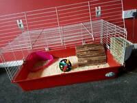 Rabbit n cage