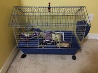 Hedgehog for sale!!!!