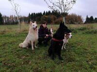 Dog trainer, dog training advisor