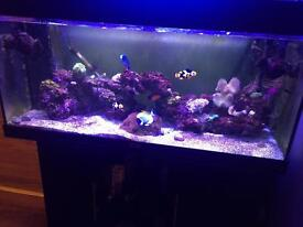 180L marine aquarium with fish and coral
