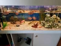 Complete 400 L Aquarium