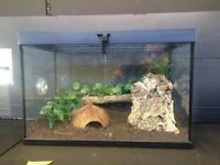 Small frog tank