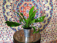 Pretty Green Plant in Metal Pot