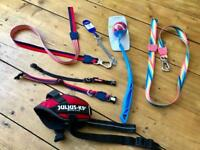 Dog leads, Harness and Accessories