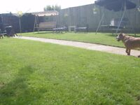 All garden work, lawn care packages est 10yrs 07961951215martin