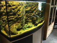 Beautiful fluval bow fronted aquarium