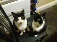 2 beautiful cats