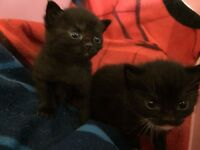 Two kittens free to good home!
