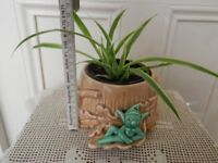 Spide plant Chlorophytum Young Pendent HOUSE PLANT