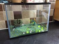 Cold water fish tank with accessories