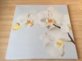 White Orchid Picture