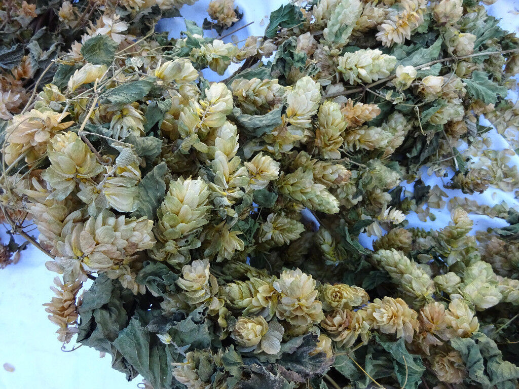 Dried Hops Garland Real Not Artificial Home Decor Wedding