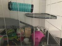 Large cage for rodents