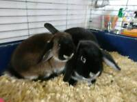 Mum and daughter rabbits free to a good home