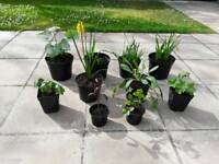 10 x Hardy Garden Plants in Pots + 2 Xtra FREE - £20 - Glenrothes