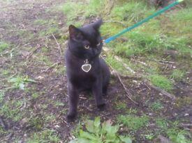 Little Black Cat Salem Missing from the 23/07/18