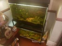 Fish tank.. or nearest offer