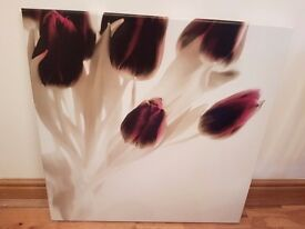Picture - tulips