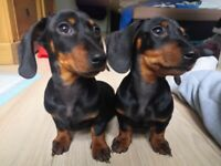2 10week old boys for £3000(for both)
