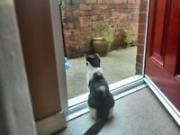 Lovely Cat (Felix) for sale £10 to a good home, loving and affectionate,basic equipment included,