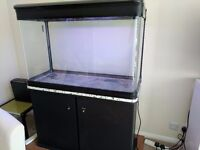 55 Gallon Fish Tank with Black Stand & two 1400 External Filters for sale