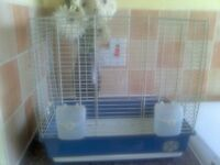 lizard hen bird and cage bird is rung 45 pound