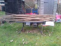 runner Bean poles / firewood. 8ft plus