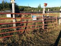 16' steel gate