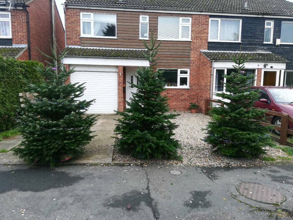 Christmas Trees For Sale In Red Lodge Suffolk Gumtree