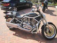 V Rod Harley Davidson, VRSCAW