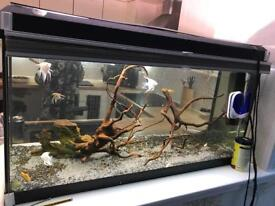 Fluval Fish Tank 200l, with heater, lights filter, driftwood and various fish