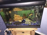 4 ft fish tank with fish