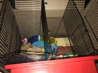 large wire hamster cage and accessories