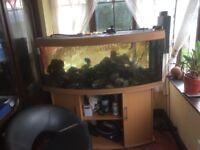 Juwel Vision 450 litre bowed front fish tank plus all accessories