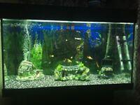 3ft Juwel fish tank full set up.