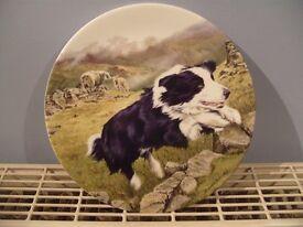 "Bradford Exchange Royal Grafton China 8"" Boarder Collie plate (THE CHAMPION)"